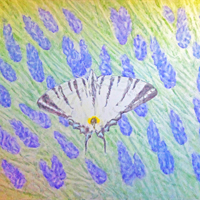 Butterfly - acrilico su tela / acrylic on canvas, cm 70x100  (2012)