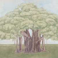 Ficus - acrilico su tela / acrylic on canvas, cm 70x100  (1996)